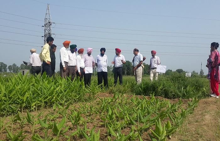 कृषि विभाग छवि-6
