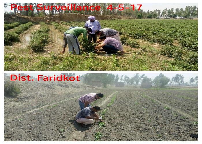 कृषि विभाग छवि-36