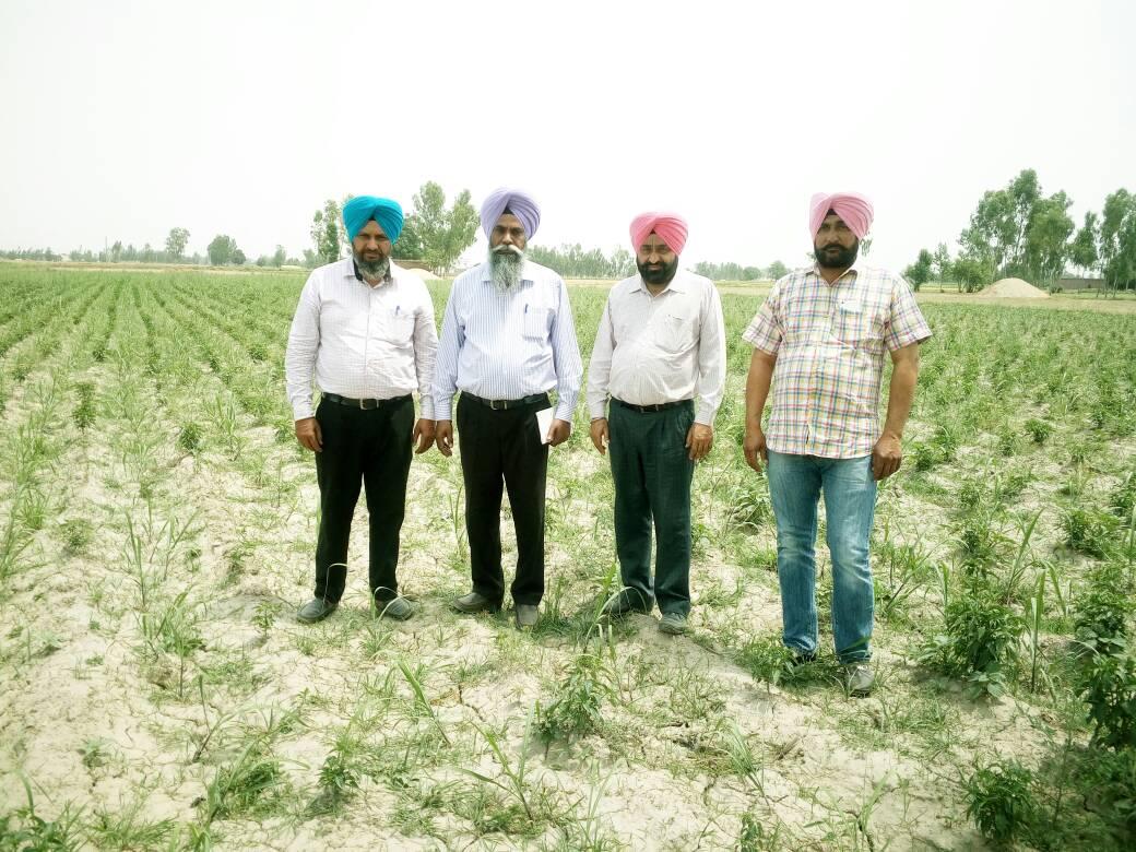 कृषि विभाग छवि-29